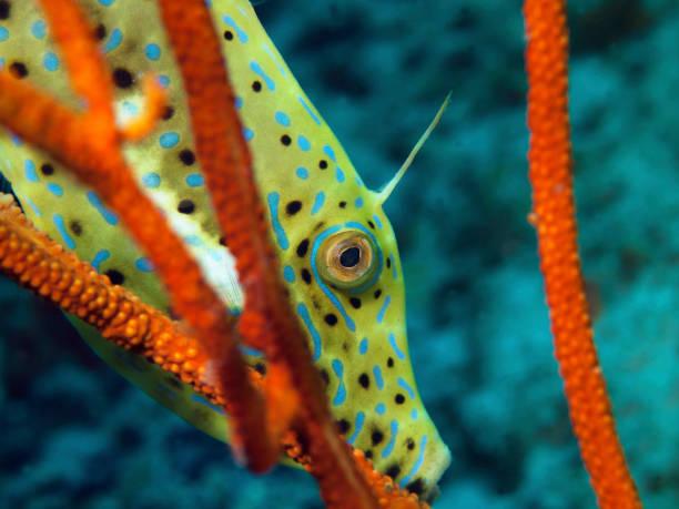 Close-Up: Fische, die sich zwischen roten Korallen verstecken. Sehr malerische Aufnahme während eines Tauchgangs in Raja Ampat, Indonesien – Foto