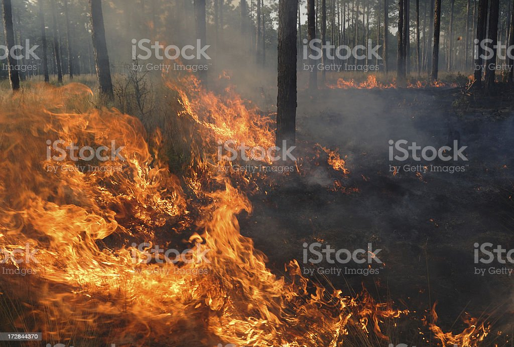 Close-up flames of a forest fire stock photo