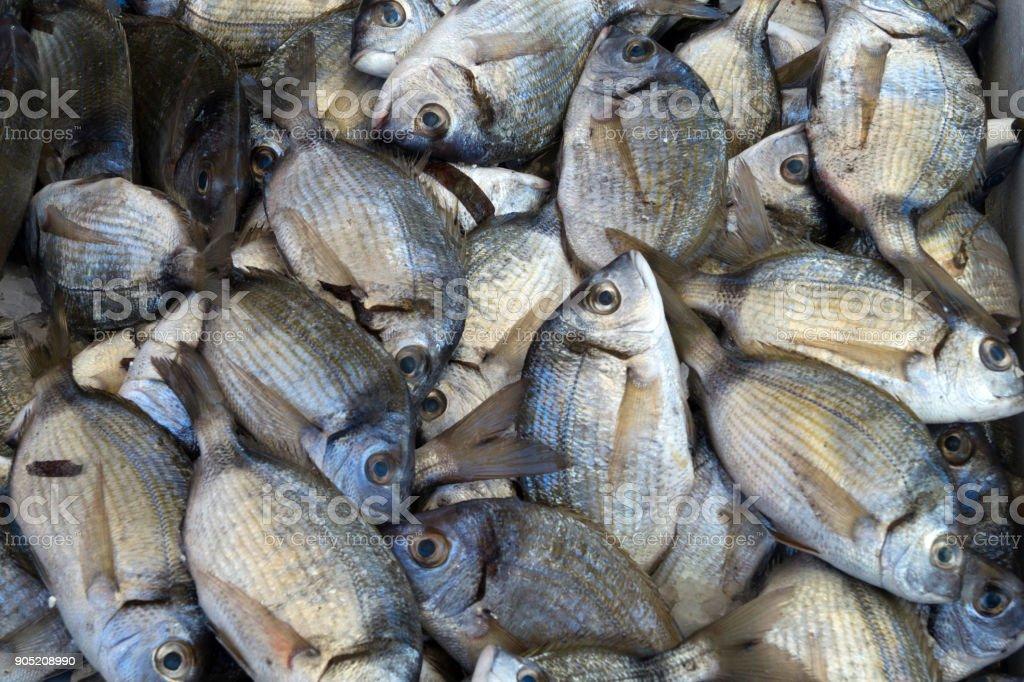 Close-up fresh raw whole fish stock photo