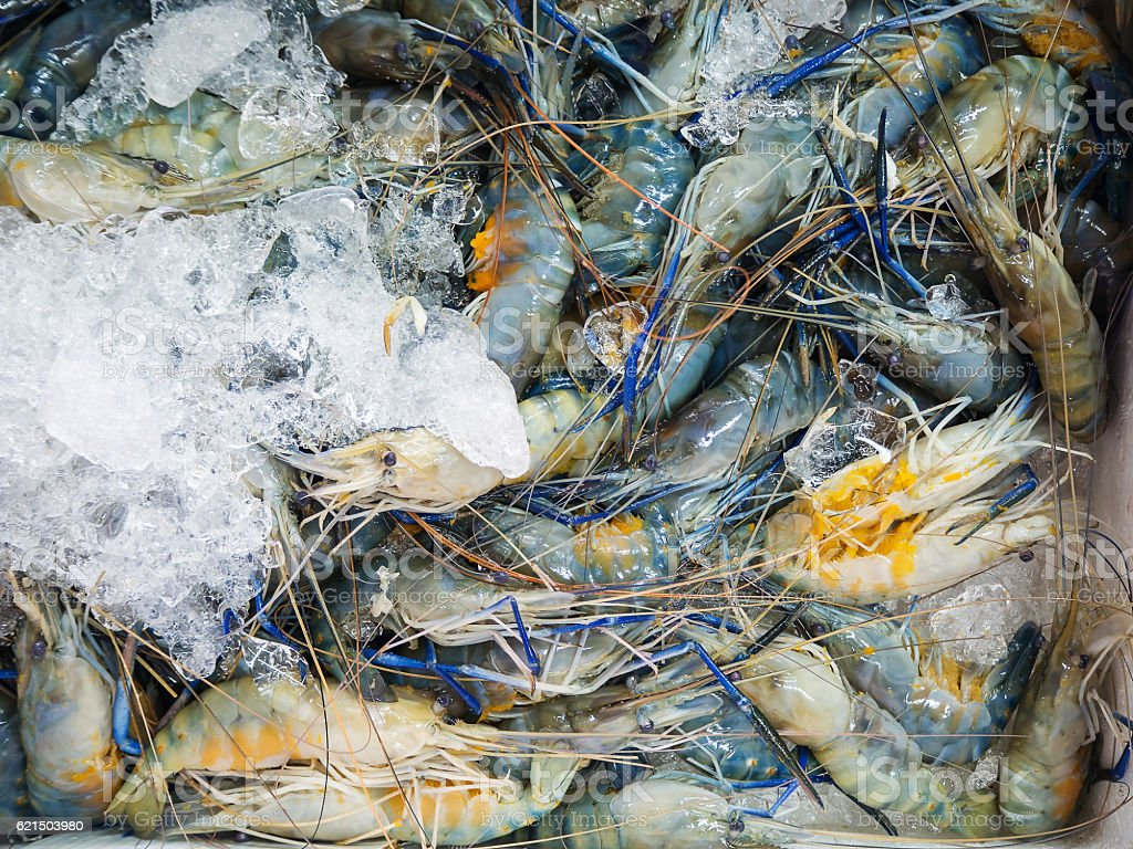 Closeup Fresh shrimp at the market,Thailand photo libre de droits