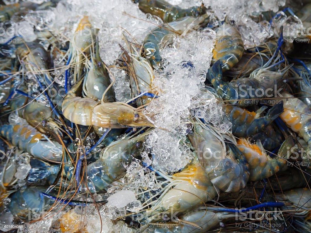 Closeup Fresh shrimp at the market,Thailand foto stock royalty-free