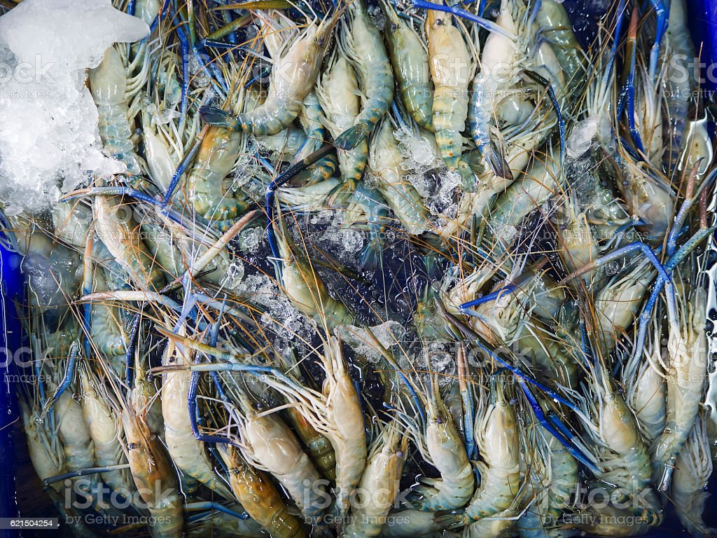 Closeup Fresh shrimp at the market,Thailand foto stock royalty-free