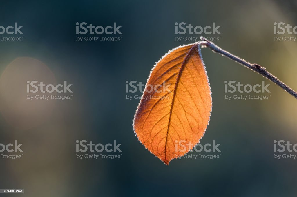 Close-up from frosty leaf with autumn colors and beautiful light stock photo