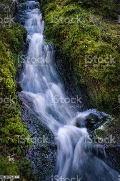 Photo of Close-up from spring stream at summer evening in National Park, Finland