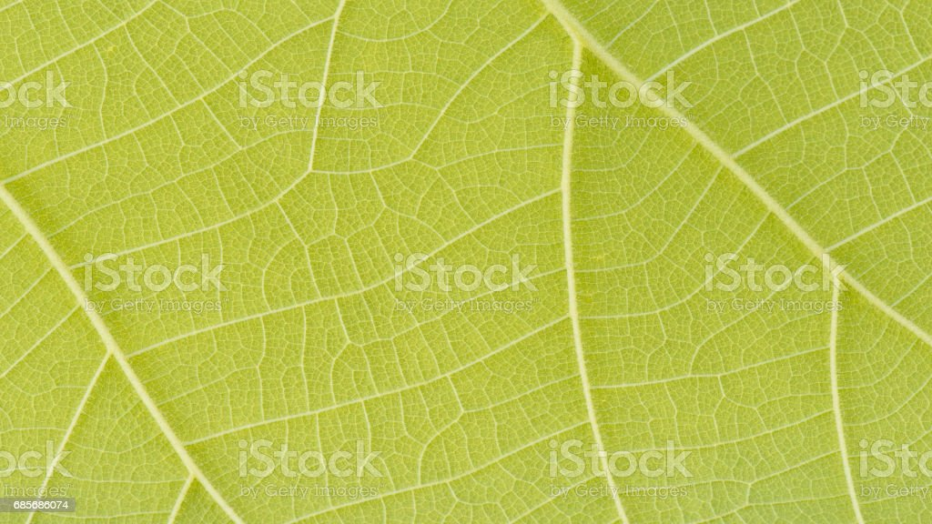 Close-up green leaf for background and textured foto de stock royalty-free