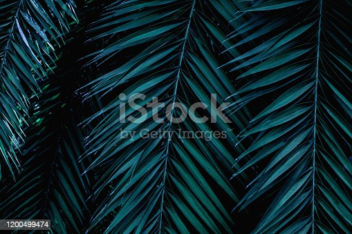 909846922 istock photo closeup green palm leaf and shadow 1200499474