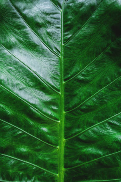 close-up green tropical leaf texture pattern background - foliate pattern stock photos and pictures