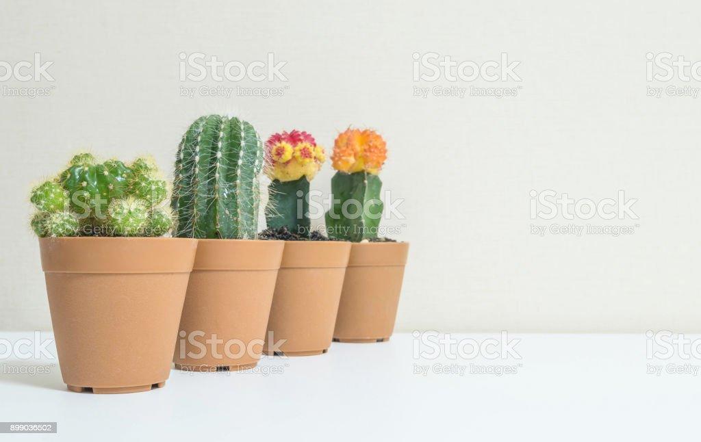 closeup gruppe von sch nen kaktus in braunen kunststofftopf f r dekorieren auf unscharfen wei en. Black Bedroom Furniture Sets. Home Design Ideas