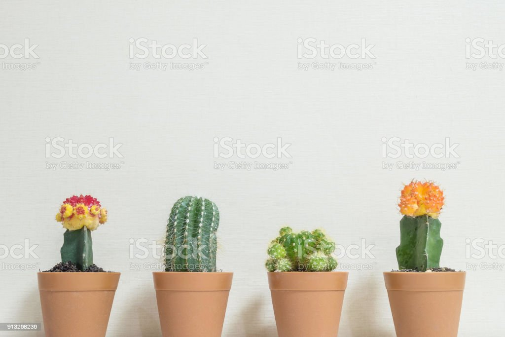 Closeup group of beautiful cactus in brown plastic pot for decorate on blurred cream color wallpaper wall textured background in room with copy space stock photo