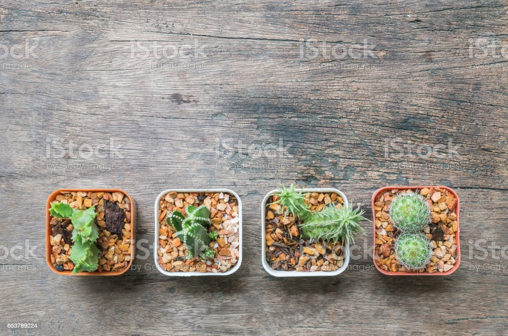 Closeup group of cactus in plastic white and brown pot on wood desk textured background in top view with copy space stock photo