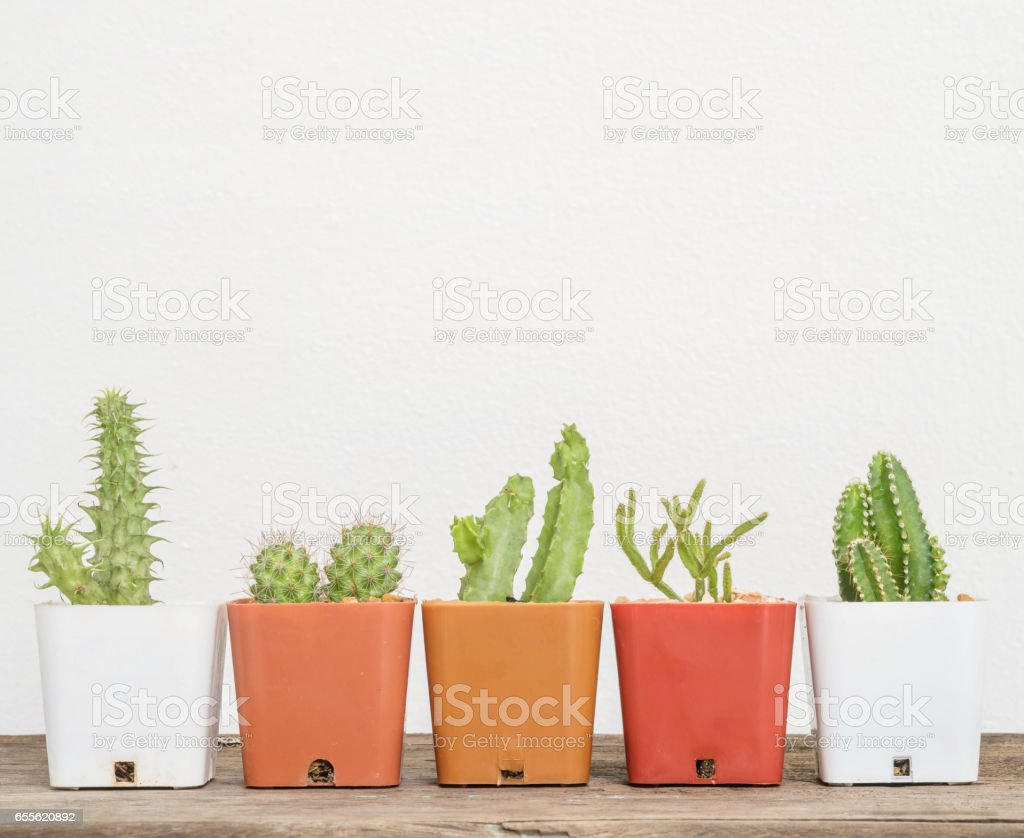 Closeup group of cactus in white and brown plastic pot on blurred wood desk and white cement wall textured background with copy space stock photo
