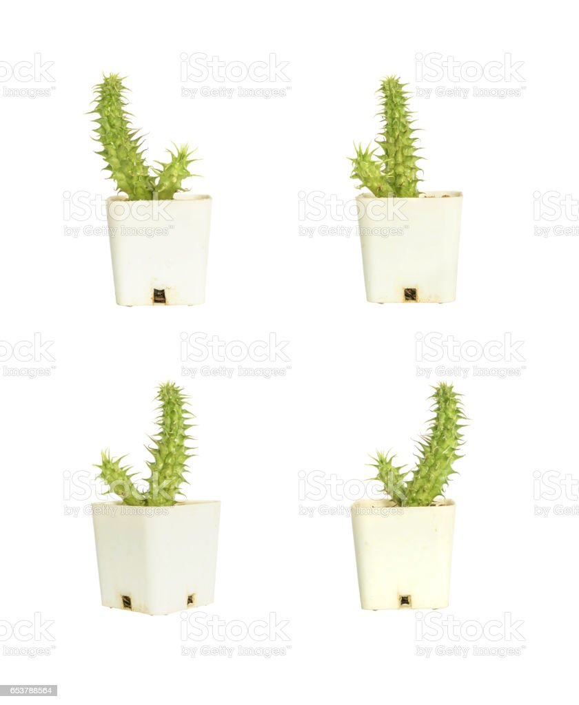 Closeup group of cactus in white plastic pot isolated on white background with clipping path stock photo