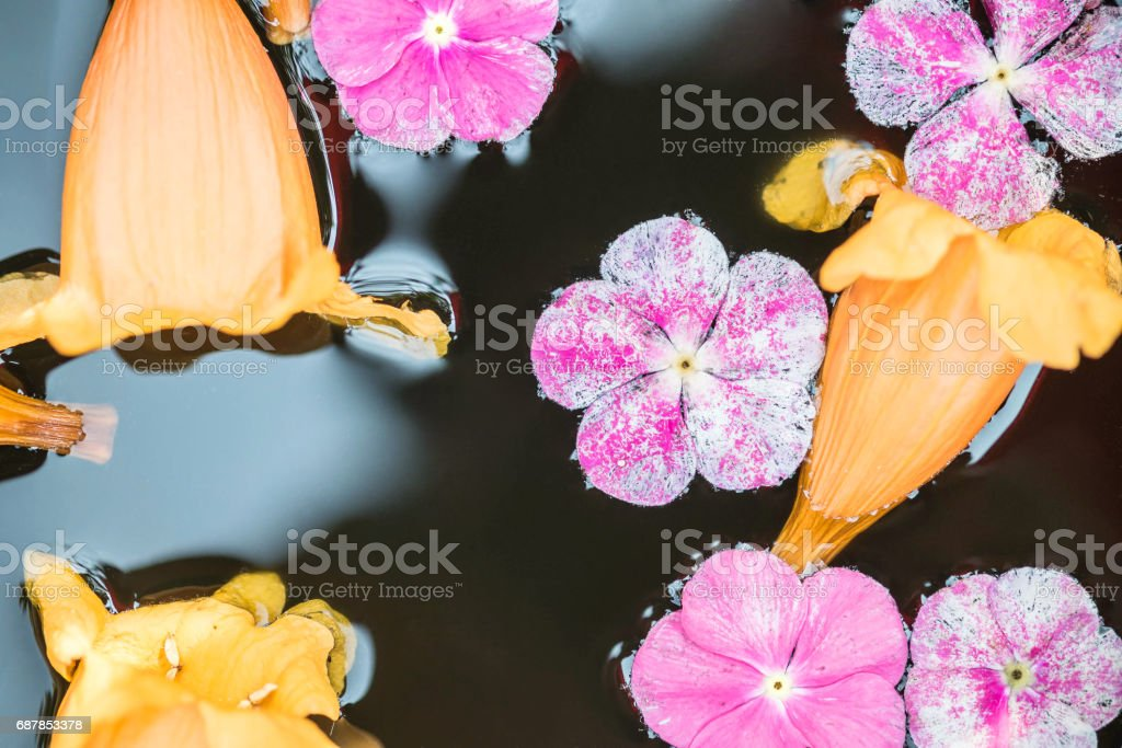 Closeup group of fallen pink and yellow flower float on water in basin for decoration in the garden textured background stock photo