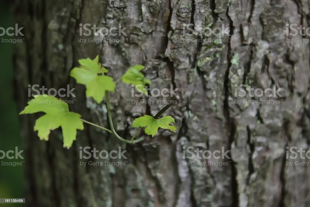 Close-up growing sprout stock photo