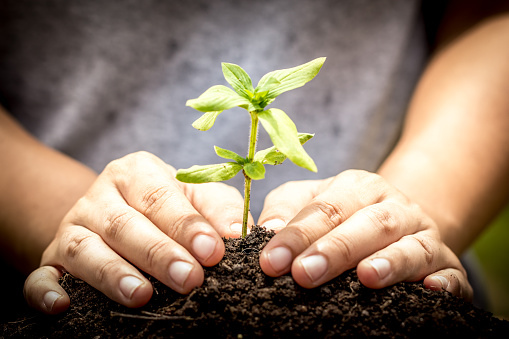 486530452 istock photo Closeup hand planting young tree in soil on green background 486528786