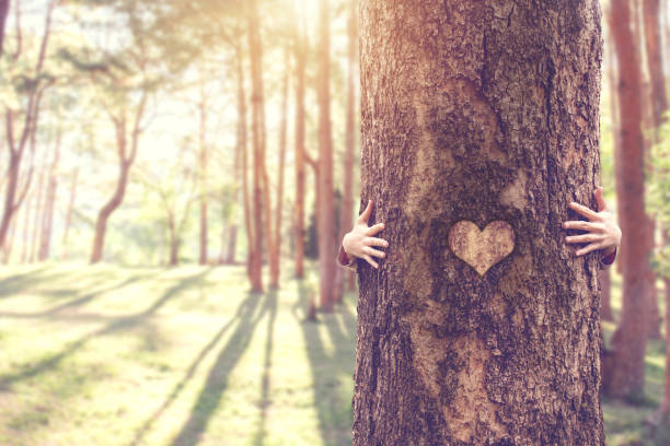 Closeup hands of woman hugging tree with heart shape, copy space. Closeup hands of woman hugging tree with heart shape, copy space. tree hugging stock pictures, royalty-free photos & images