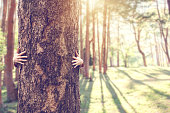 istock Closeup hands of woman hugging tree with sunlight, copy space. 1096815382