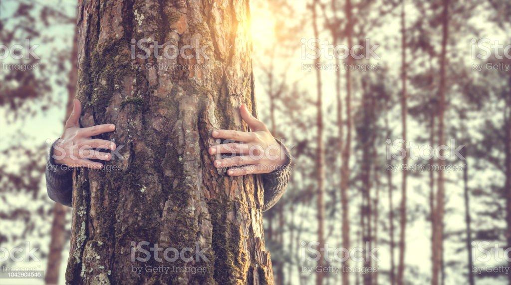 Closeup Händen Frau umarmt Baum mit Sonnenlicht - Lizenzfrei Asiatischer und Indischer Abstammung Stock-Foto