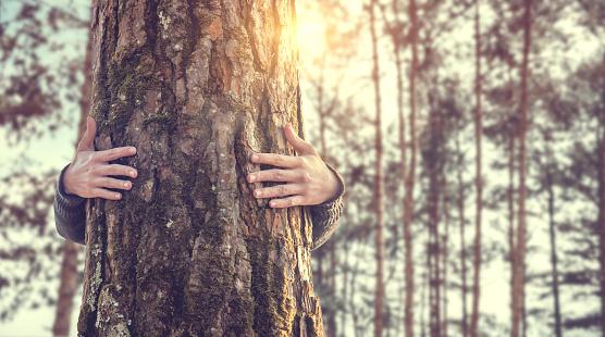 Closeup Händen Frau Umarmt Baum Mit Sonnenlicht Stockfoto und mehr Bilder von Asiatischer und Indischer Abstammung