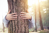 istock Closeup hands of woman hugging tree with sunlight 918517770