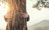 istock Closeup hands of woman hugging tree with sunlight 922773442