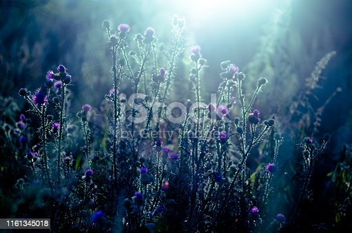 Closeup horizontal art photo of evening autumn flowers in dark field. Soft Back light of cold blaze sun. Deep ethereal blue color. Unique creative modern look image. Melancholy nature mood atmosphere.