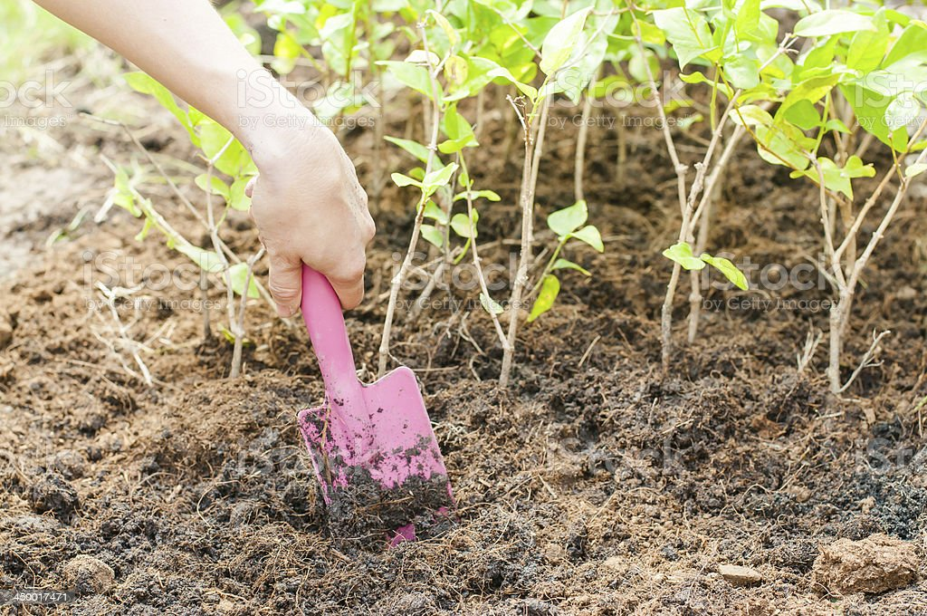 Close-up image of hand holding a shovel cultivating the soil royalty-free stock photo