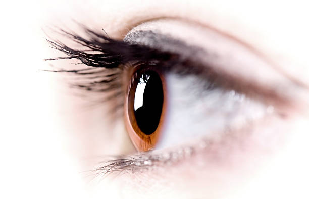 Makro-Eye – Foto