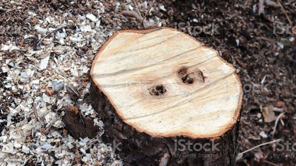 Imagen de primer plano de la sección de árbol truncado. - foto de stock