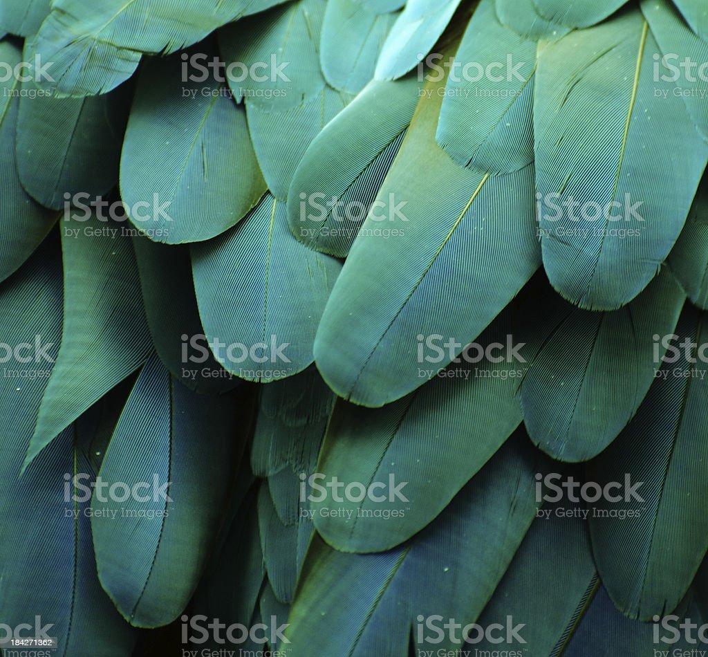 Close-up image of turquoise macaw feathers stock photo