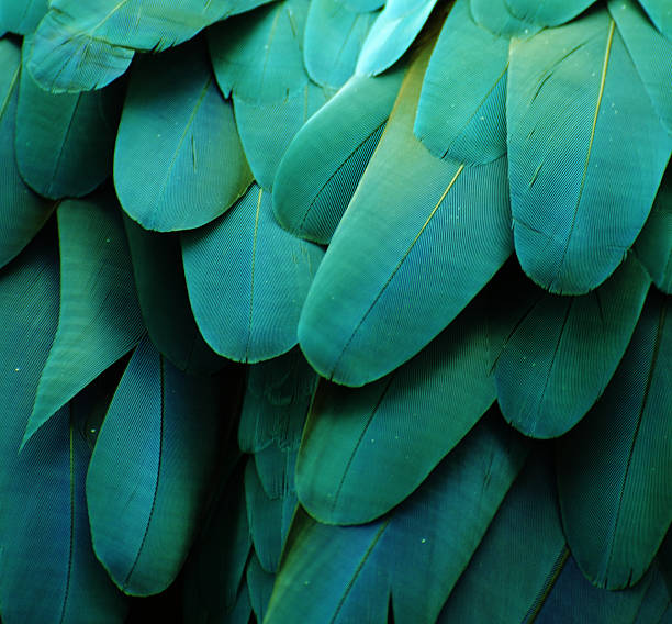 close-up image of turquoise macaw feathers - green winged macaw stock photos and pictures
