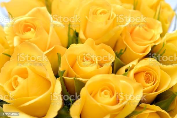 Closeup image of yellow rose bouquet picture id172264942?b=1&k=6&m=172264942&s=612x612&h=l3utqqn3fvinha2hqbi79ohg7ocgyzwqoobchgxsmte=