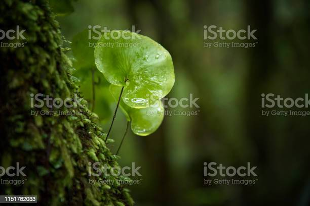 Photo of Close-up in the rain forest