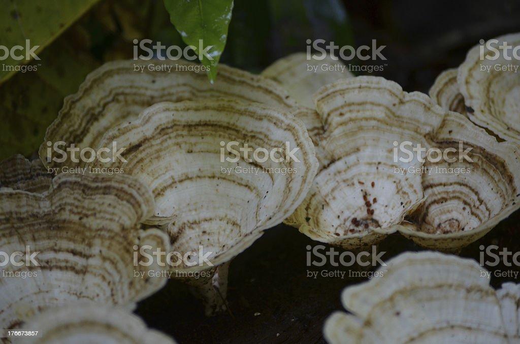 Close-Up Jungle Mushroom Fungus royalty-free stock photo