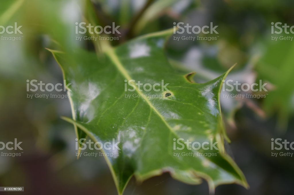 Close-Up Leaves stock photo