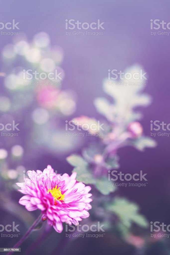 closeup macro flower royalty-free stock photo