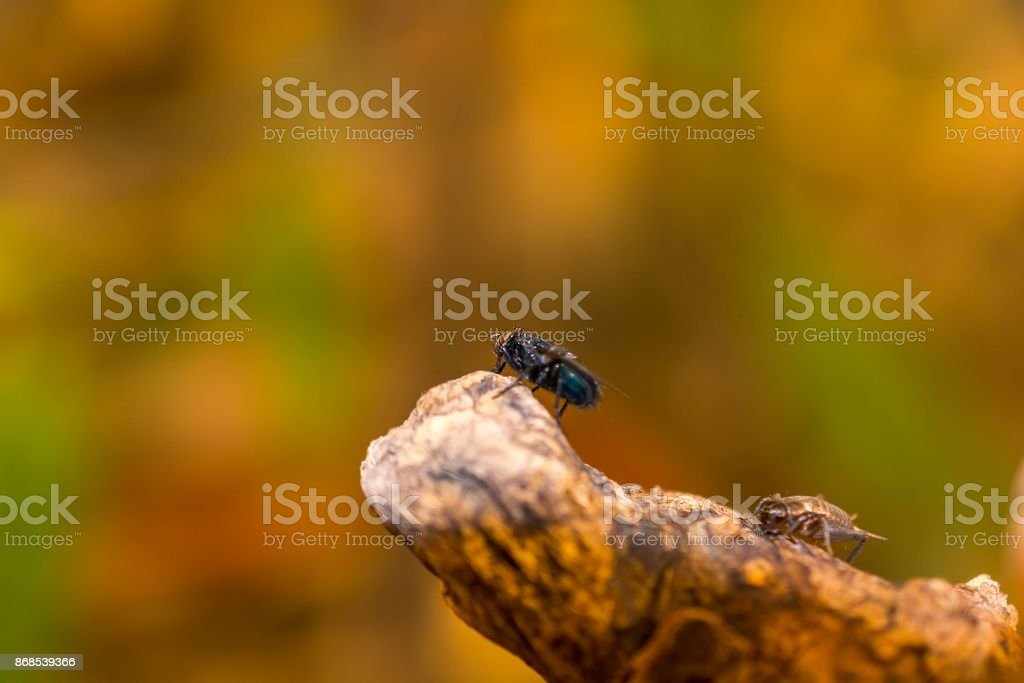 Closeup macro green fly insect on tree branch in nature stock photo