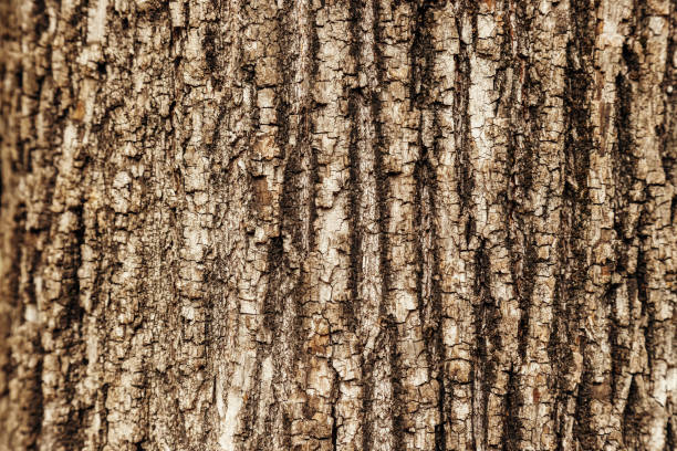 Close-up macro texture of a tree trunk stock photo