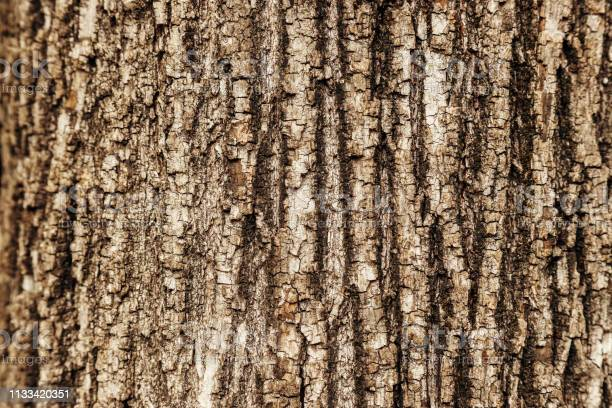 Photo of Close-up macro texture of a tree trunk