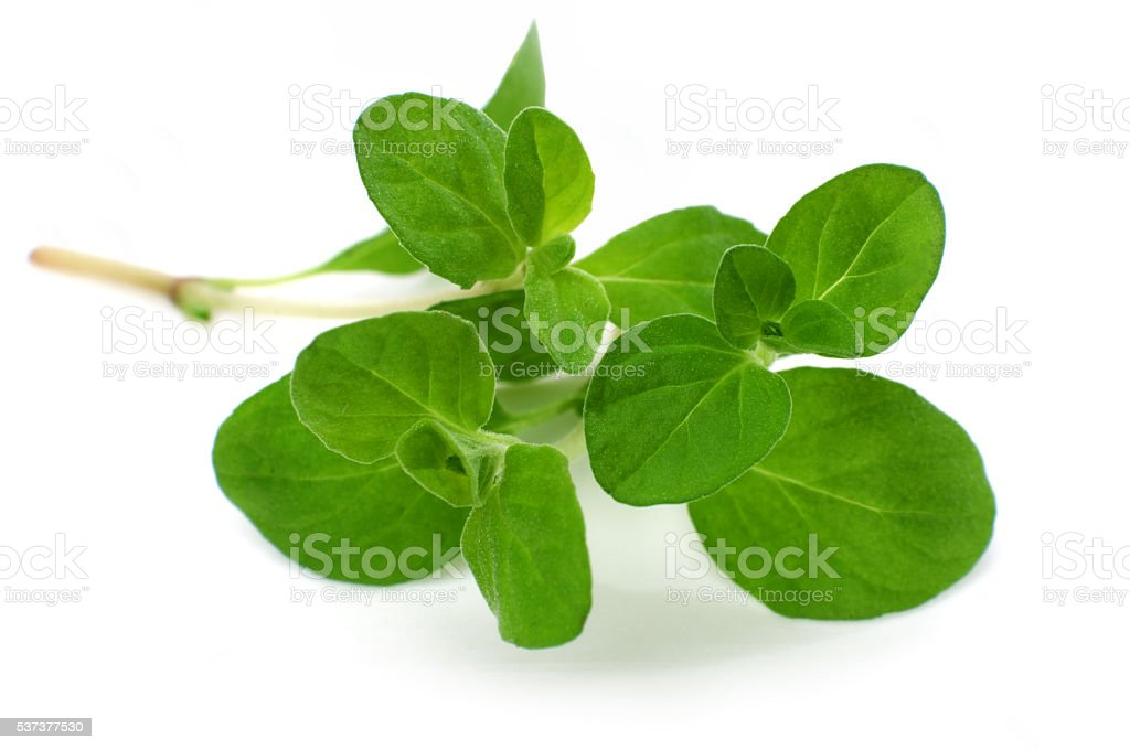 Close-up marjoram isolated stock photo