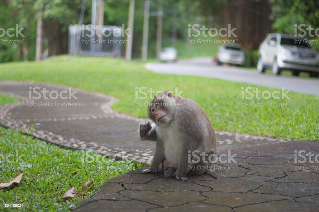 Close-up monkey select focus, Asian monkeys stock photo