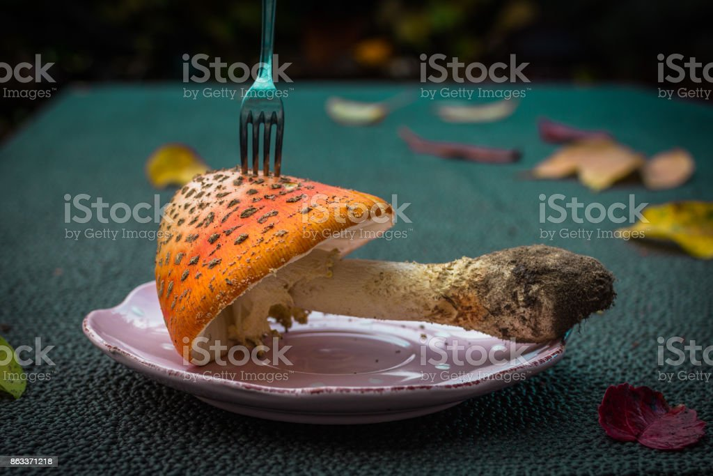 Closeup mushroom-amanita on a plate with a fork. stock photo
