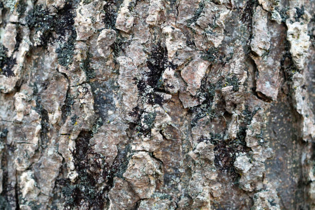 close-up natural tree bark detailed moss growth stock photo