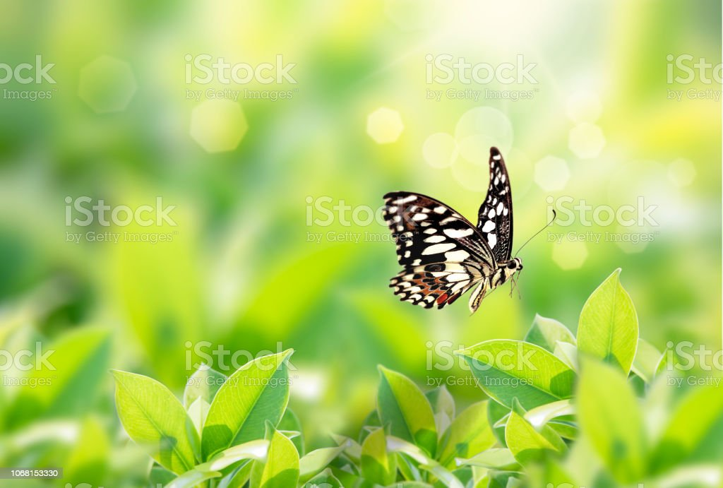 Closeup Nature View Of Butterfly With Green Leaf On Blurred