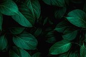 istock closeup nature view of green leaf background 1208290498