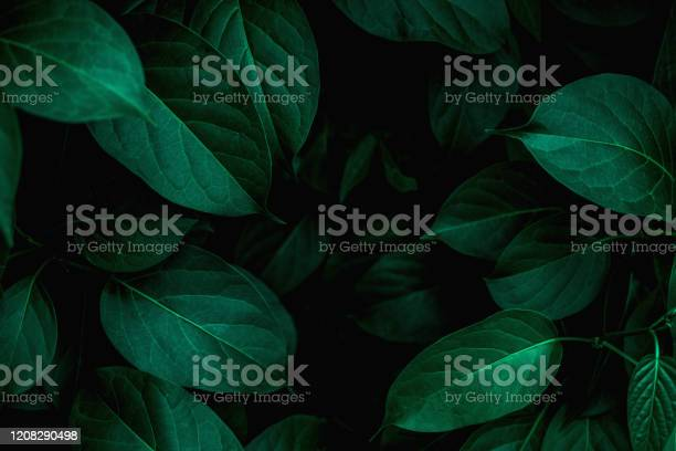 Photo of closeup nature view of green leaf background