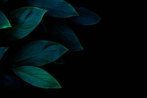 Corona Viruses against Dark Background