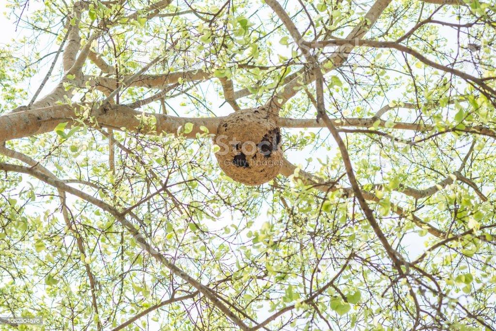 Primer nido de avispa sobre fondo de árbol borrosa - foto de stock