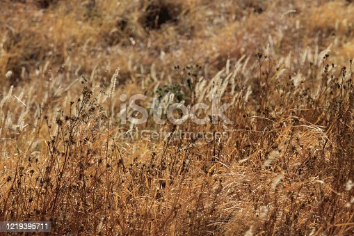 istock Closeup od selectively focused drygrass 1219395711