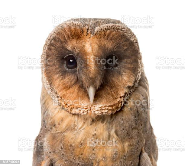 Closeup of a barn owl isolated on white picture id823749078?b=1&k=6&m=823749078&s=612x612&h=ihciy3r6g1s2r1vxkanpr86jhzsefdhtla9qm30q b4=